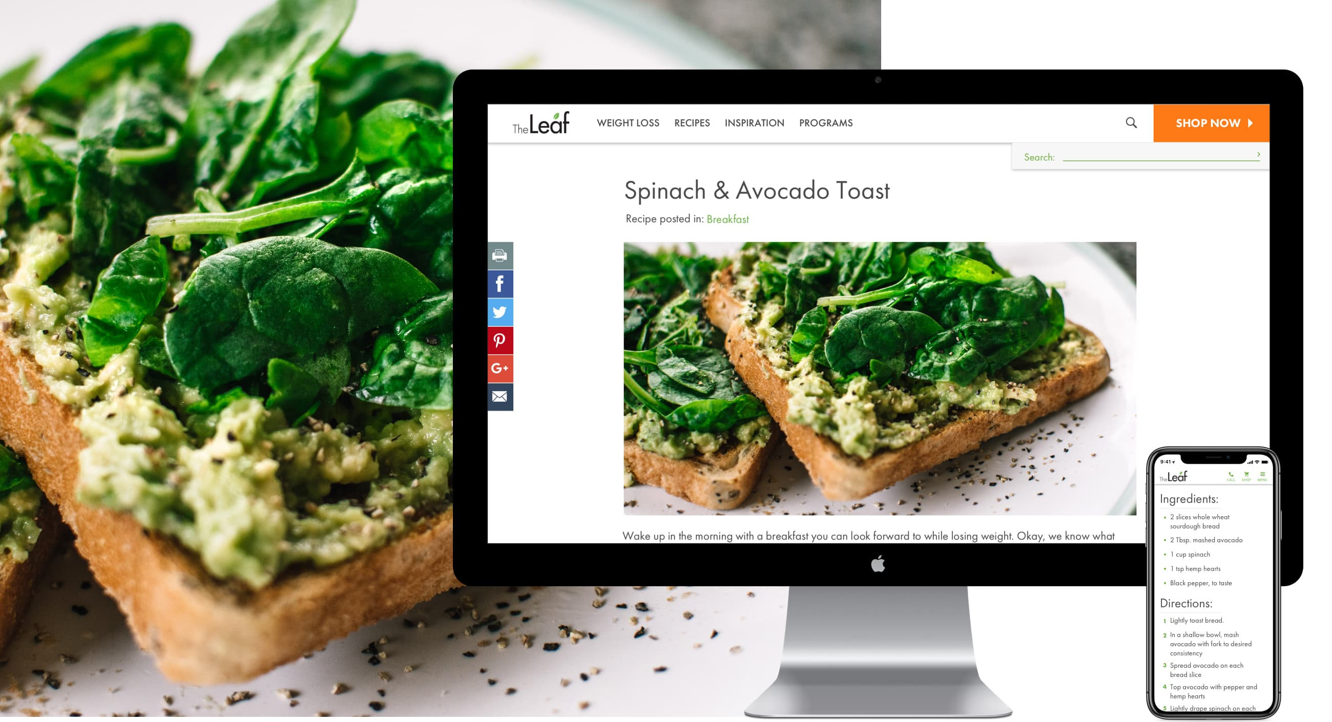 King Design The Leaf Nutrisystem Recipe Responsive Website Design